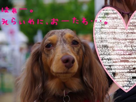 20_original_convert_20120605162730.jpg