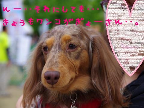 22_original_convert_20120605162827.jpg