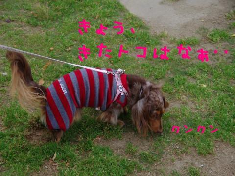 2_original_convert_20120605162016.jpg