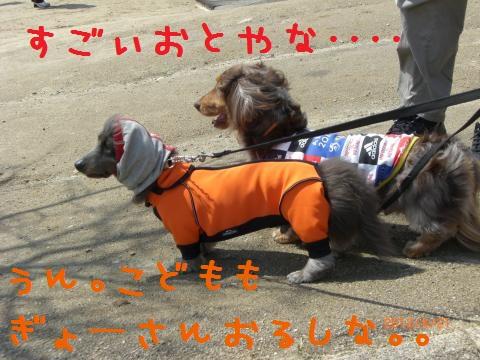 CIMG0788_convert_20120502105732.jpg