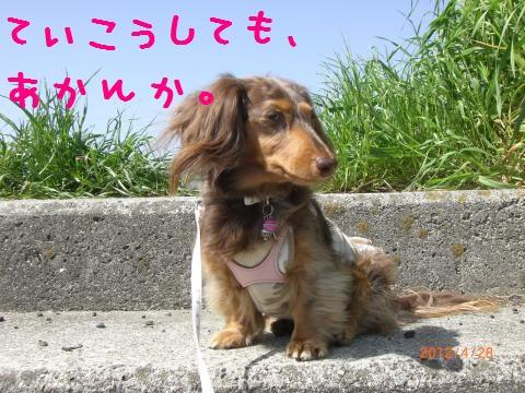 CIMG0828_convert_20120518101914.jpg