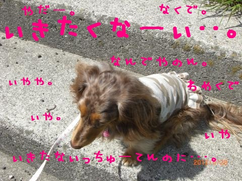 CIMG0829_convert_20120518101952.jpg