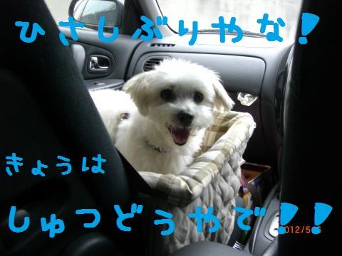 CIMG0858_convert_20120518110803.jpg