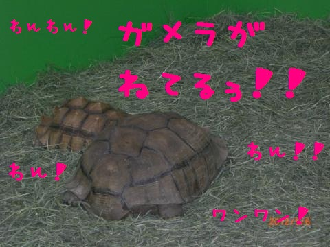 CIMG0864_convert_20120518111250.jpg