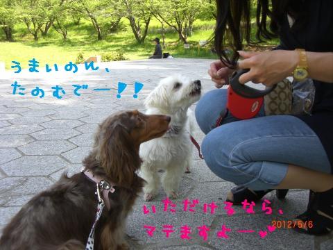 CIMG0889_convert_20120518113313.jpg
