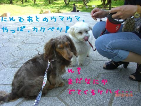 CIMG0891_convert_20120518113445.jpg