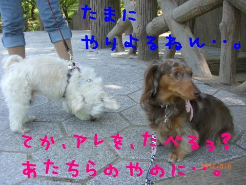 CIMG0894_convert_20120518113630.jpg