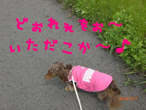 CIMG0915_convert_20120518114918.jpg
