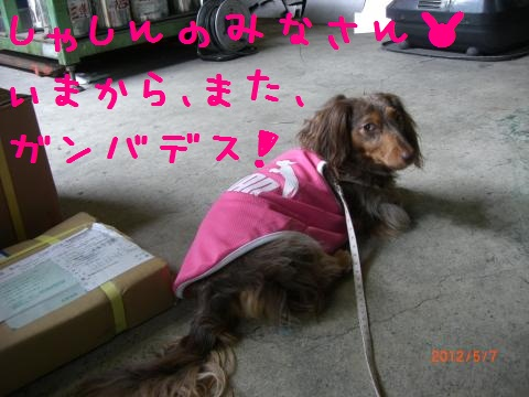 CIMG0918_convert_20120518115021.jpg