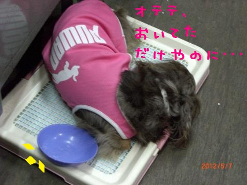 CIMG0926_convert_20120518115534.jpg