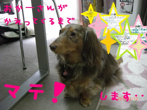 CIMG1103_convert_20120613133354.jpg