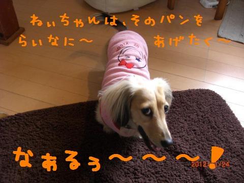 CIMG1255_convert_20121212134409.jpg