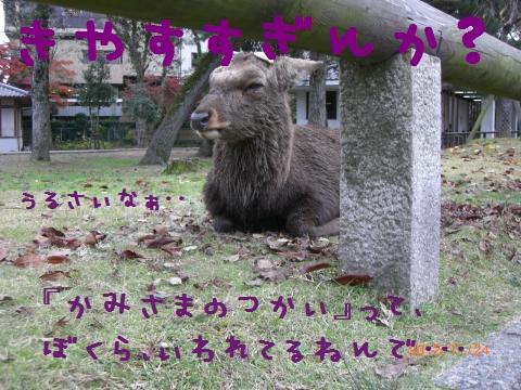 CIMG1264_convert_20121212134610.jpg