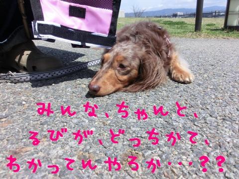 CIMG6847_convert_20120502105851.jpg