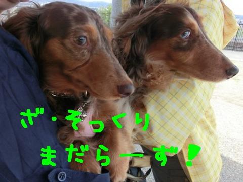 CIMG6912_convert_20120502105553.jpg