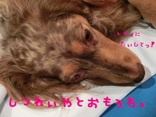 CIMG9421_20121128093925.jpg