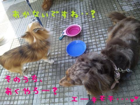 DVC00019_convert_20121011140809.jpg
