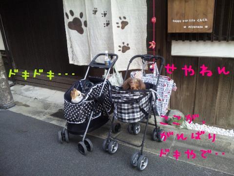 DVC00022_convert_20121011141239.jpg