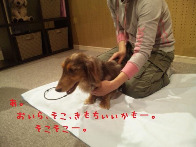 DVC00176_20121126113949.jpg