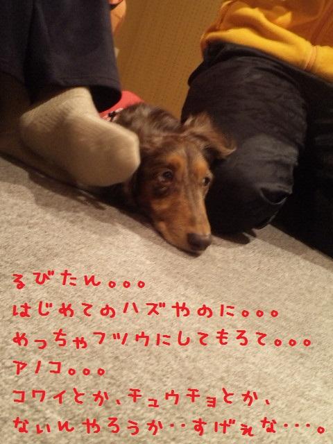 DVC00180_20121128094306.jpg