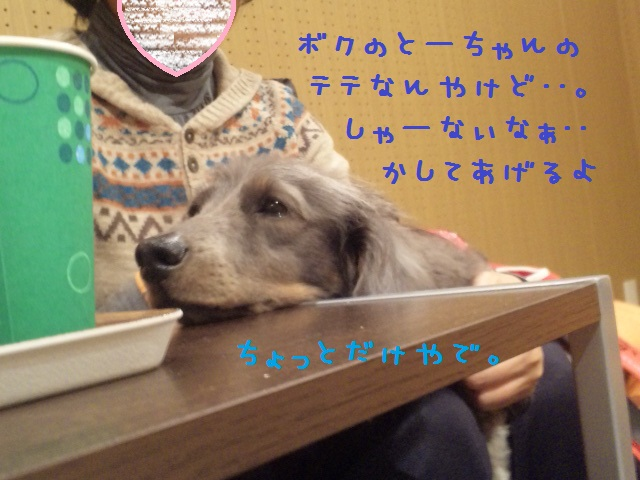 DVC00185_20121128093604.jpg
