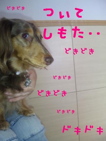 DVC00696_convert_20120518100851.jpg