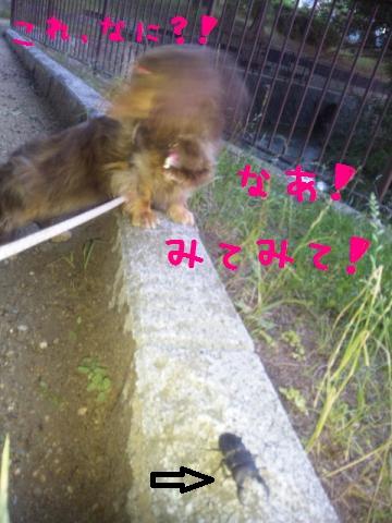 DVC00795_convert_20120802131438.jpg