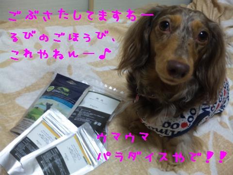 DVC00901_convert_20120918145917.jpg