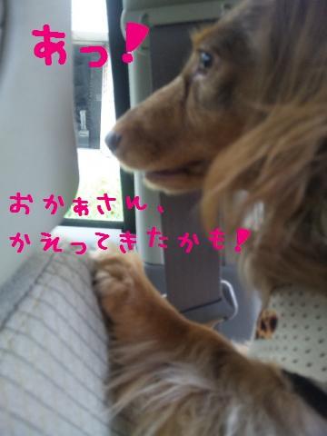 DVC00944_convert_20120927105356.jpg