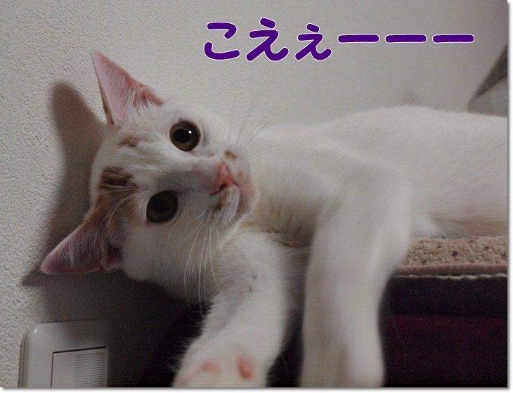 1listkoeedejiko20121127.jpg