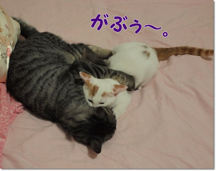 1ivylistkyonennnoimagoro7gatu20120724 (3)