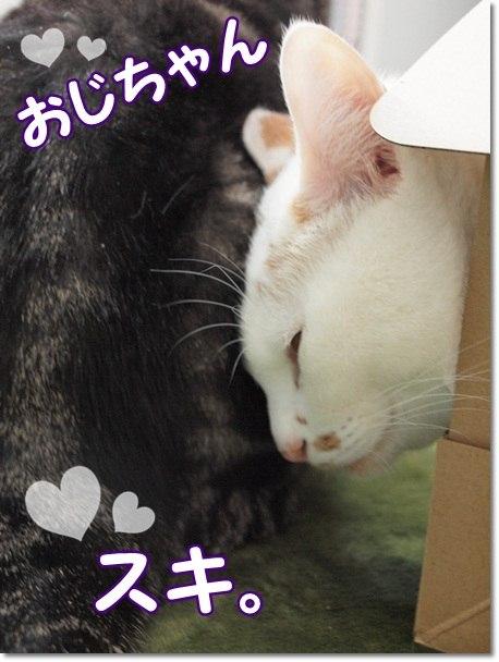 1nekokimohuroku20130110 (1)