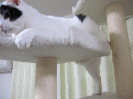 足だって長い!