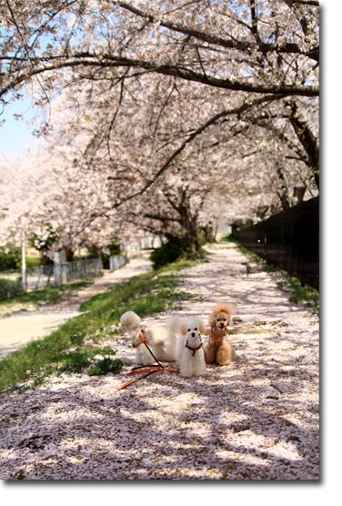 初めて迎えた春