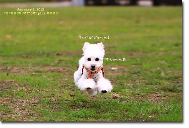 今年初飛行犬