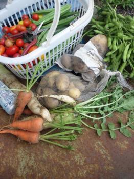20130727菜園収穫