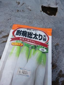 20130825秋蒔大根
