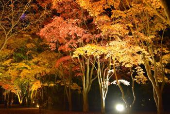 2013-11-3-kouseturight3kyaku+002_convert_20131110154627.jpg