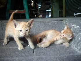 20121117猫