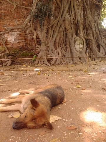 20121117犬