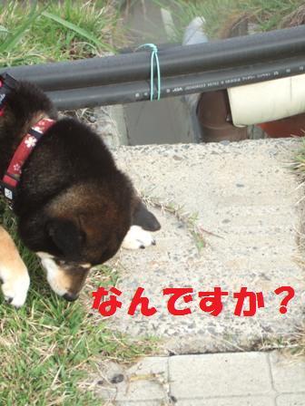 blog3574.jpg