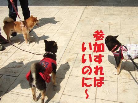 blog3687.jpg