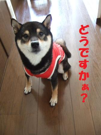 blog3734.jpg