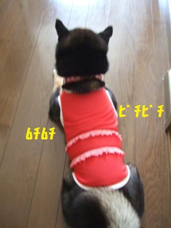 blog3735.jpg