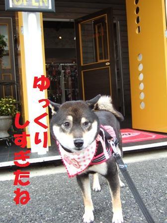 blog3763.jpg
