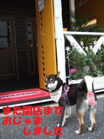 blog3826.jpg