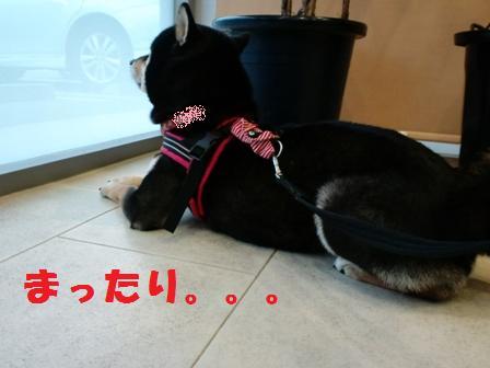 blog3842.jpg