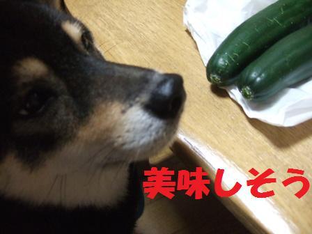 blog3945.jpg