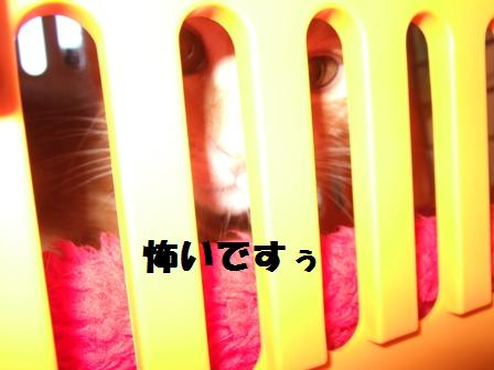 blog3952.jpg