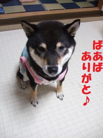blog3974.jpg